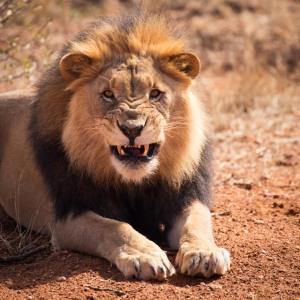 @ N/ a'an ku se Wildlife Sanctuary
